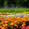花々に誘われて