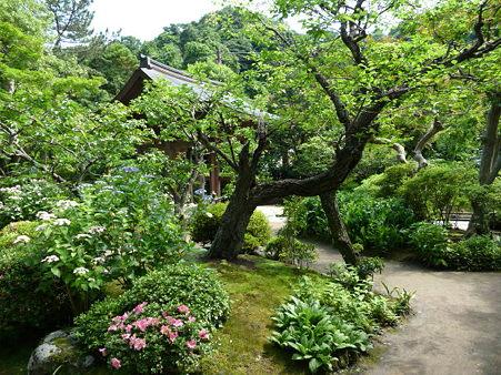 090612-海蔵寺 (29)
