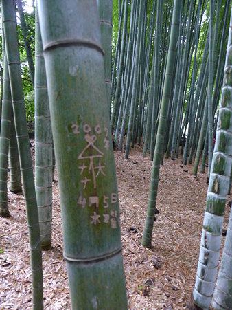 090625-イタズラで傷付いた竹 (4)