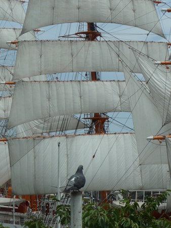 090720-日本丸 総帆展帆 (108)