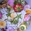 Photos: 花がら捨てに洗剤液使用