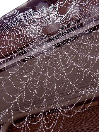 大きくて水滴の豪華な蜘蛛の巣