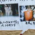 Photos: RIMG1666-2 仔猫貰ってください♪