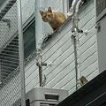 Photos: RIMG0017+1 三階からコンニチワ♪