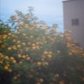 Photos: 花の集い