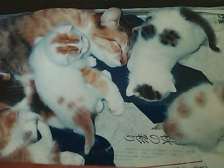 ナナちゃんと仔猫たち