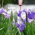 写真: 2009_0531_151848-P1020795