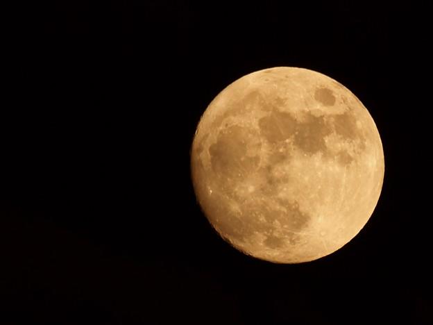 もうすぐ満月(月齢12.6)