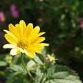 Photos: 太陽の花~♪