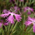 Photos: flower2 6520