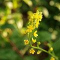 flower8 137