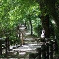 Photos: 散歩道