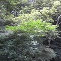 季節の紅葉(もみじ)