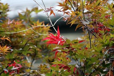 2009.08.01 和泉川 赤い葉