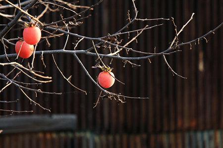 2009.10.31 鶴見川 柿