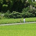 Photos: やがては尊き記憶となりぬ・夏:2007_0815_dimageA1_PICT0021