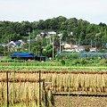 Photos: 実りの秋・稲架掛け風景:2007_0917_A540_008