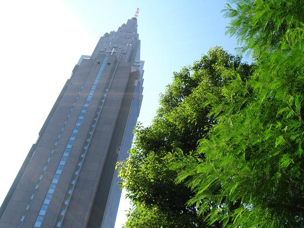 朝の光・新宿の緑たち:2009_0917_canonpwsA590is_IMG_3145