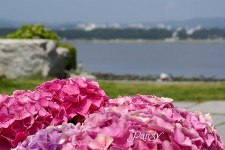 海と・・紫陽花と・・八景島 2