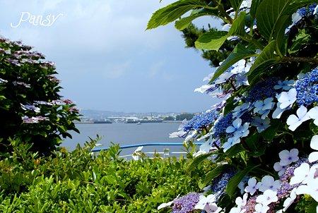 海と・・紫陽花と・・ 八景島 3