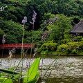 Photos: 水カンナ咲く夏の池・・