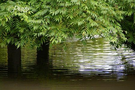 夏の日の水辺にて・・2