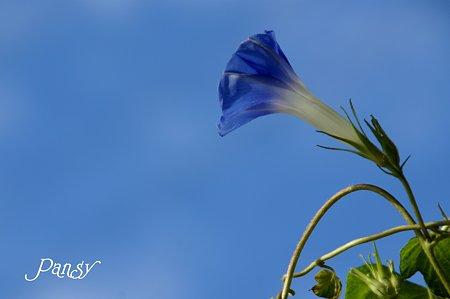 blue in blue・・