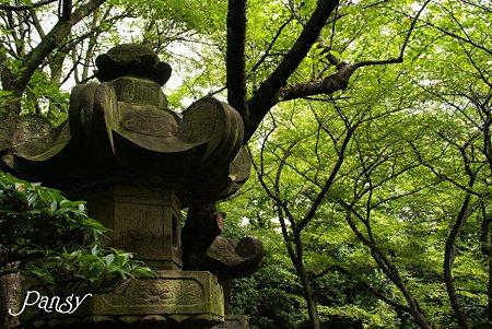 石灯籠と・・夏緑・・