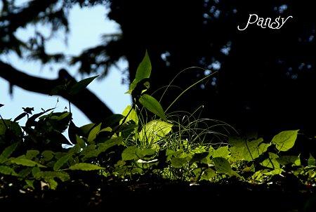 leaves・・
