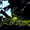 Photos: leaves・・