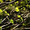 葉っぱたち・・