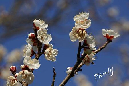 浄妙寺に咲いて・・1