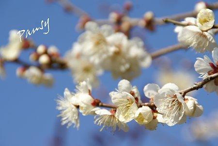 浄妙寺に咲いて・・2