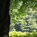 Photos: 緑の重なり・・