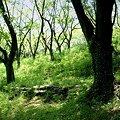 Photos: 草の緑・・