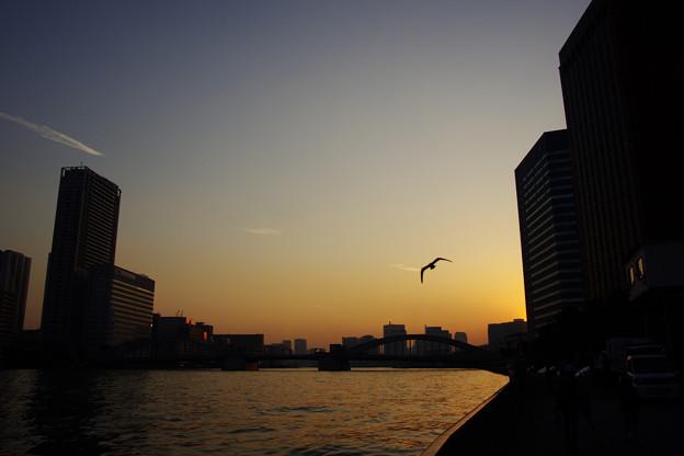 隅田川の夕焼け