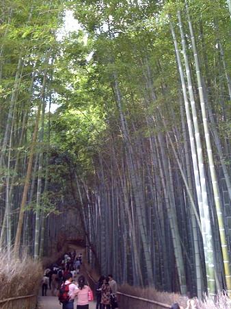 2009年10月11日 嵐山15