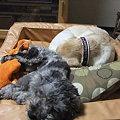 Photos: 紫音となら一緒に寝れる