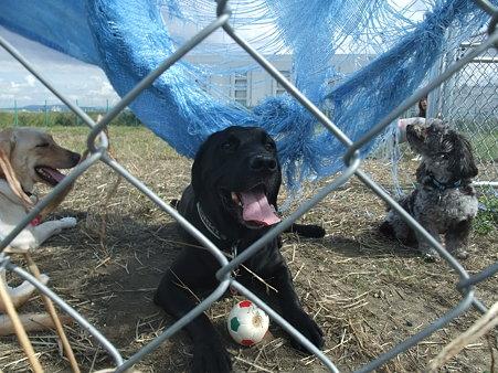 この犬達は、一応日陰だと思っているらしい