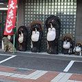 Photos: 信楽焼きのタヌキ