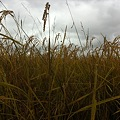 11年10月15日 100人収穫祭前日 002