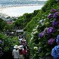 Photos: 海を見下ろす紫陽花参道、成就院!(6/7)