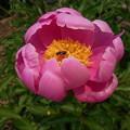 [Spring] 2012|何て花だろう?