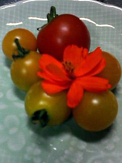 Summer Dream 35- 菜園で採れた新鮮野菜