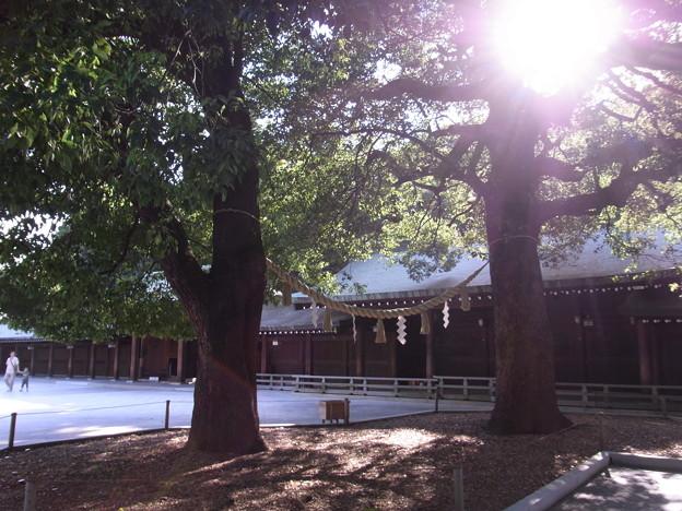 【東京|渋谷・原宿】 明治神宮 「縁結び」で有名な夫婦の楠(1)