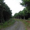写真: 090616-9クロツグミの森