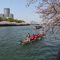 浪華桜~大川畔