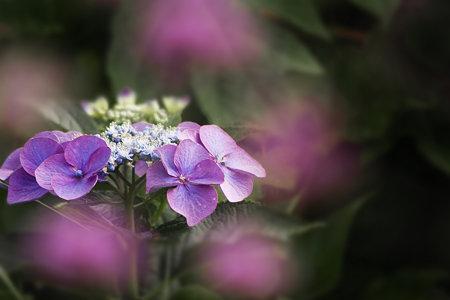 紫の星に囲まれて