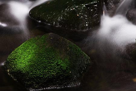 緑の落ち着く場所