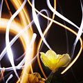 写真: 花のオーラ